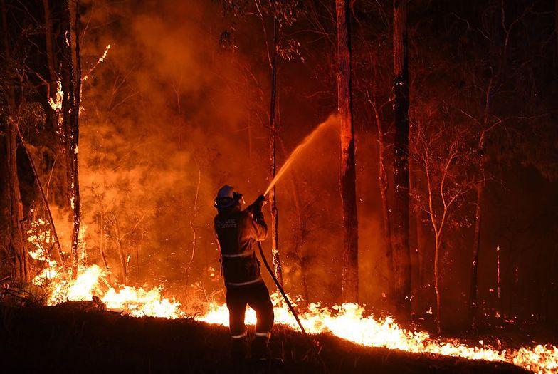Niezwykłe zdjęcia z Australii. Natura się odradza