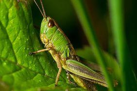 8 owadów, które... zjadasz