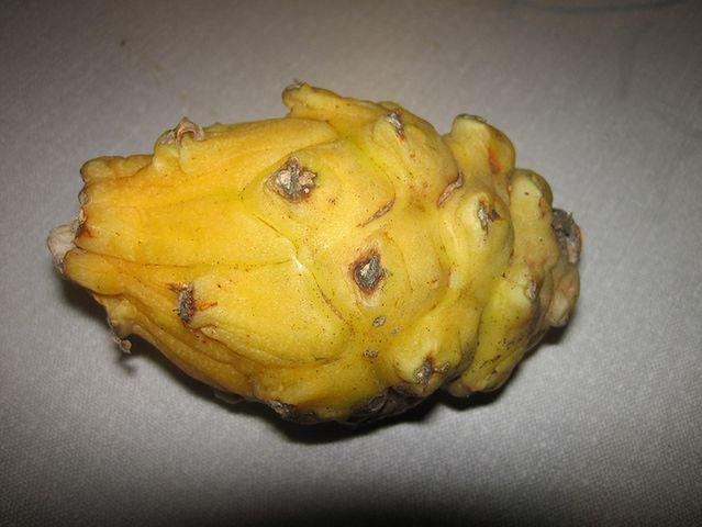 Pitaja, czyli smoczy owoc