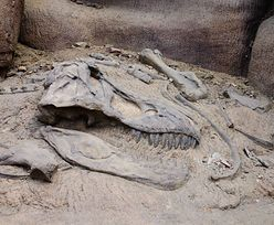 Odkryto nowy gatunek dinozaura. To Ngwevu intloko