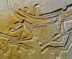 W Niemczech znaleźli stworzenie sprzed 150 milionów lat. To brakujące ogniwo ewolucji
