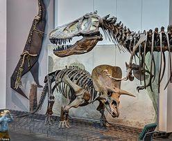 Archeolodzy odkryli szkielet nowego gatunku dinozaura