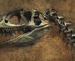 Sensacyjne odkrycie naukowców. Dinozaury miały łupież