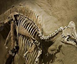 Na szkielecie dinozaura odkryto objawy nowotworu, na który chorują dzieci