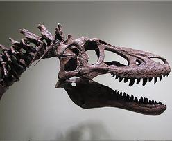 Szkielet dinozaura wystawiony na aukcje. Ma 68 mln lat
