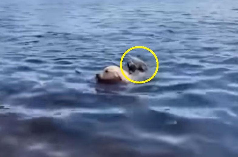 """""""Nie mogliśmy w to uwierzyć"""". Pies rzucił się w wodę, zobacz z czym wrócił"""