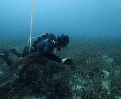 Bomba biologiczna na dnie Bałtyku. Sprawą zajmuje się Komisja Europejska