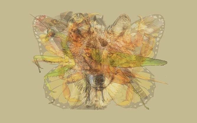 Test osobowości. Jakie zwierzę widzisz na obrazku?