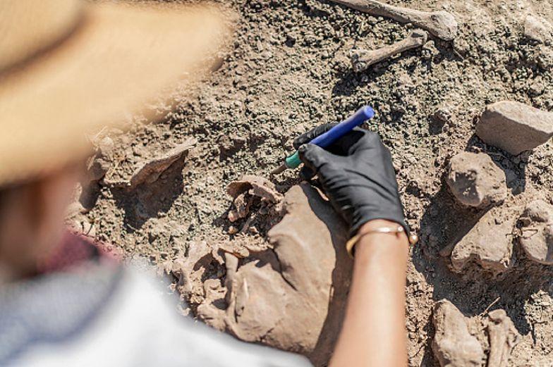 Niesamowite znalezisko. Prehistoryczne szczątki w parku w Parku Narodowym w USA
