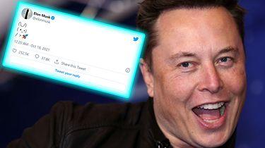 """Elon Musk znów tweetuje. Jednym wpisem wysłał """"na księżyc"""" kilka kryptowalut"""
