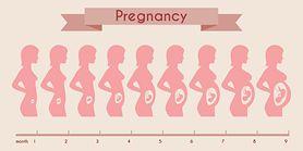 Trymestry ciąży - charakterystyka, pierwszy trymestr, drugi trymestr, trzeci trymestr