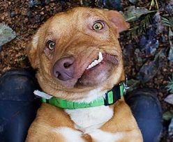 """""""Idealnie niedoskonały"""". Pies o niezwykłym wyglądzie znalazł kochający dom"""