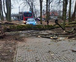 Drzewo runęło na 12-latkę. Nie żyje