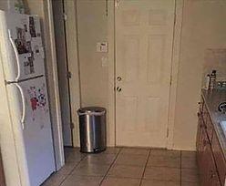 Na zdjęciu ukrył się pies. Z zagadki rezygnuje większość po 5 minutach