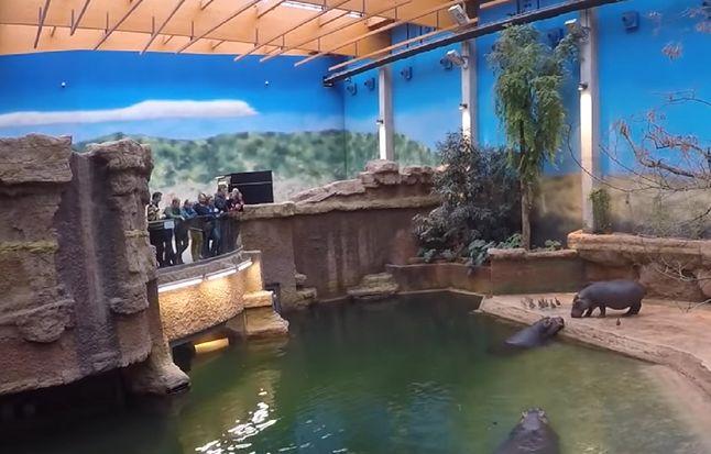 Afrykarium w zoo we Wrocławiu