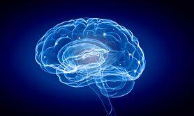 Naukowcy odkryli sposób na wymazywanie ludzkiej pamięci