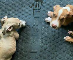 """""""Jesteśmy weganami i kochamy zwierzęta"""". Sąd ukarał ich za to, co zrobili psom"""