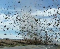 USA. Tornado biegaczy pustynnych. Nagranie hitem internetu