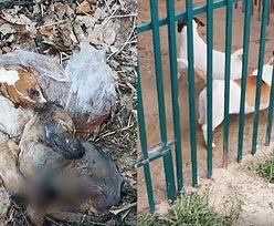 Drastyczne sceny na Pomorzu. Znaleziono ponad 120 martwych psów