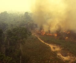 Amazońskie lasy deszczowe emitują teraz więcej CO2 niż go pochłaniają