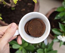Podlej kwiaty fusami po kawie. Efekt będzie zachwycający