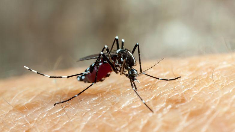 Rok 2020 jest wyjątkowo ciężki nie tylko dla ludzi, ale i dla komarów.