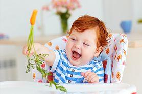 Nauka samodzielnego jedzenia niemowląt, czyli BLW