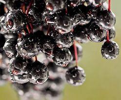 Owoce czarnego bzu. Niezastąpione na pierwsze chłody