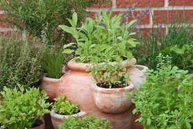 Łosoś w ziołowej skorupce