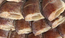 Toksyczne ryby. Gatunki, których powinniśmy unikać (WIDEO)