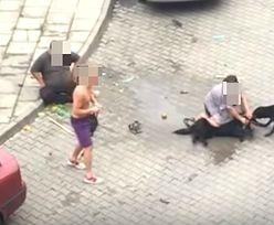 Skandal w Nowym Sączu. Pitbull zagryzł psa i rzucił się na kobietę. Policja umorzyła postępowanie