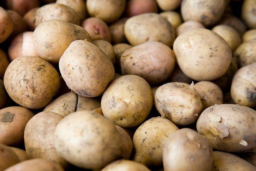 Ziemniaki późne - 11 mg witaminy C w 100 g produktu