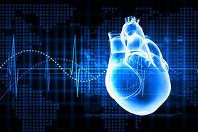 Budowa serca człowieka - schemat, praca serca
