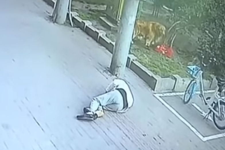 Kot doprowadził przechodnia do utraty przytomności. Pies stoczył walkę. Nagranie