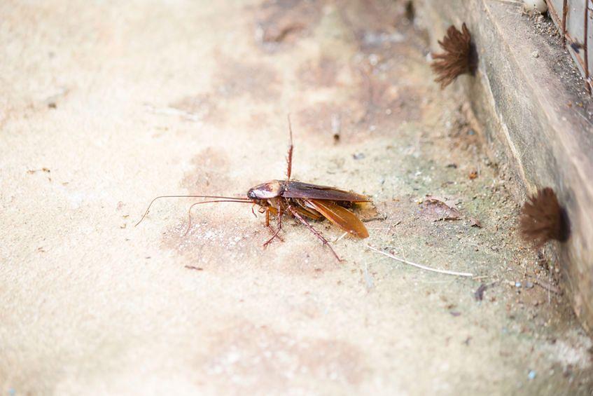 Pozbycie się z domu insektów bywa bardzo trudne