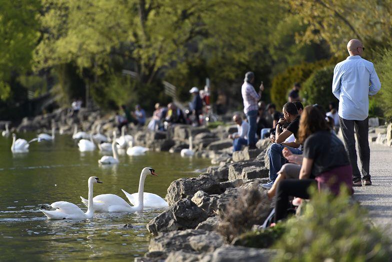 Mimo pandemii koronawirusa wielu Szwajcarów spaceruje po parkach.
