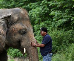 """""""Najbardziej samotny słoń świata"""" żył w tragicznych warunkach. W końcu dobre wieści"""