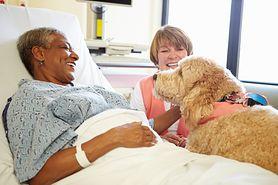 Zooterapia (animaloterapia) – czyli jak zwierzęta pomagają nam wyzdrowieć