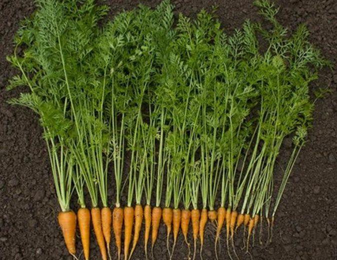 Nać i skórka marchewki