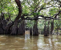 Indie. Drzewo uratowało go przed śmiercią