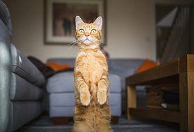 Właściciele kotów bardziej narażeni na choroby psychiczne