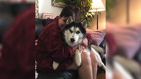 Pies uratował jej życie. Niezwykła historia (WIDEO)