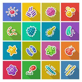 Bakteria Escherichia Coli (E.Coli, pałeczka okrężnicy) czym jest, objawy zatrucia, skutki zakażenia