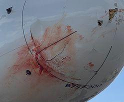 Krew spływała z dziobu samolotu. Pasażerowie byli przerażeni