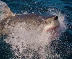 Atak rekina w Australii. Nie żyje 60-latek
