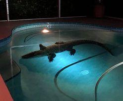 Myślał, że na podwórku jest włamywacz. W basenie było zabójcze zwierzę