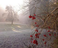 Prognoza pogody na dziś - 27 listopada. Słonecznie i pogodnie w centrum. Na południu śnieg