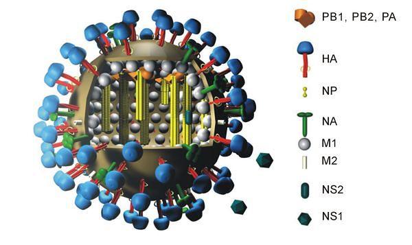 Wygląd cząsteczki wirusa grypy