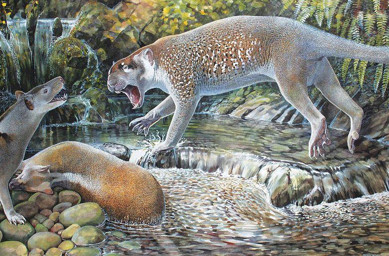 Znaleźli szczątki lwa sprzed milionów lat. To daleki krewny współczesnych kangurów