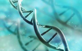 Naukowcy zmodyfikują genetycznie embrion ludzki